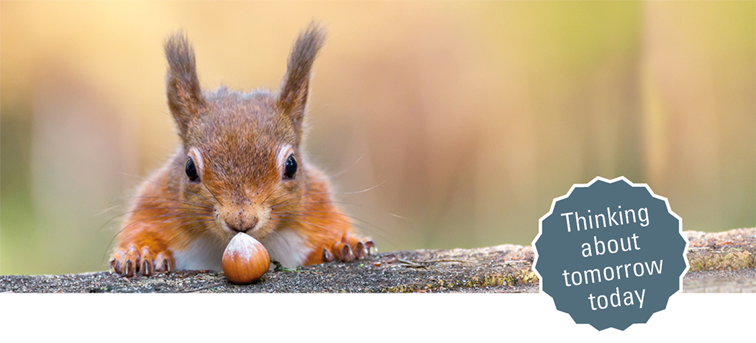 Picture of a Squirrel with a nut and the text 'thinking about tomorrow today'